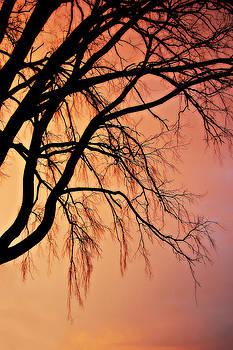 The Twilight Tree by Amy Schauland