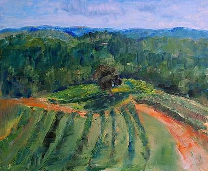 The Vineyard by Ann Bailey