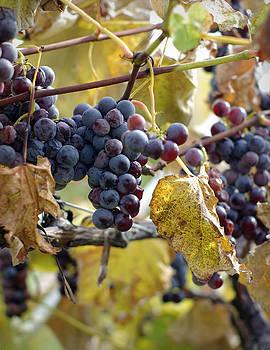 The Vineyard by Linda Mishler
