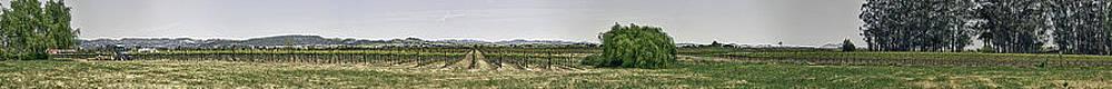 The Vineyard by Nathaniel Kolby