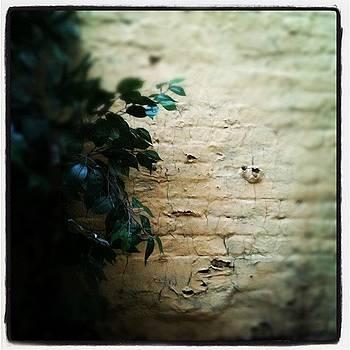 The Wall by Fern Fiddlehead