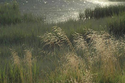 The Wetlands by Wanda Jesfield