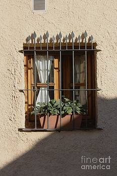 The window by Dennis Curry