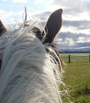 The World Looks Bette From the Back of a Horse. by Alyssa St Clair