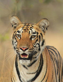 The youngster by Anuradha  Marwah