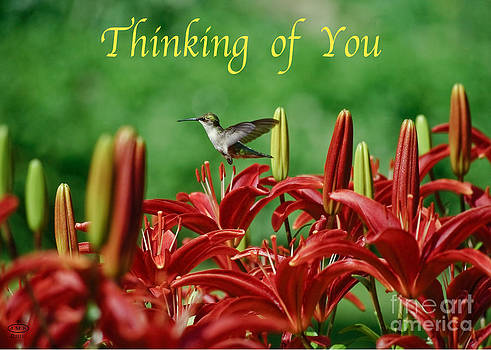 Thinking of You by John Stephens