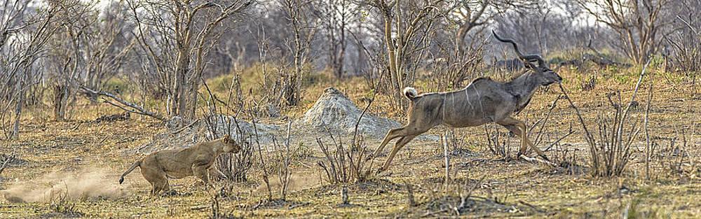 Paul W Sharpe Aka Wizard of Wonders - This is Botswana No.  1 - Kudu Chase