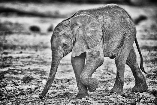 Paul W Sharpe Aka Wizard of Wonders - This is Botswana No.  6 - Wait Up Mother