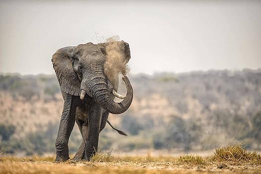 Paul W Sharpe Aka Wizard of Wonders - This is Botswana No.  8 - Feels So Good