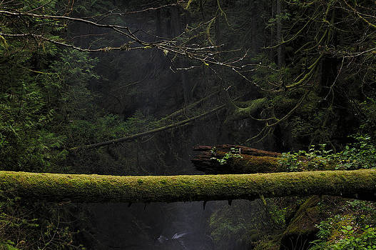 Paul W Sharpe Aka Wizard of Wonders - This is British Columbia No.64 - Squrriel Bridge Over Cypress Fa