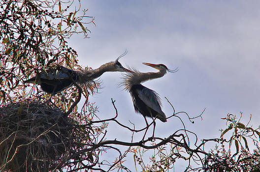 This is my nest by Roy Bozarth