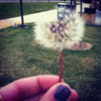This, Is My Wish by Brienne Jae Sagona