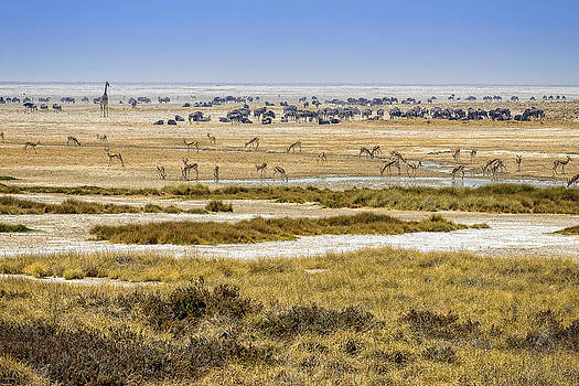 Paul W Sharpe Aka Wizard of Wonders - This is Namibia No.  1 - Waterhole at Etosha Pan