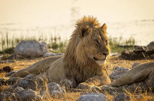Paul W Sharpe Aka Wizard of Wonders - This is Namibia No.  2 - Wake Up Buddy