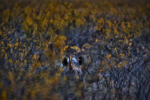 Paul W Sharpe Aka Wizard of Wonders - This is Namibia No.  6 - Hidden Black Rhinoceros