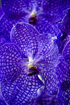 Paul W Sharpe Aka Wizard of Wonders - This is our World No. 13 - Purple and Blue Orchids