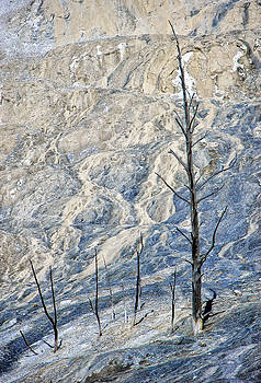 Paul W Sharpe Aka Wizard of Wonders - This is Wyoming No.  2 - Dead Trees at Mammoth Hot Springs