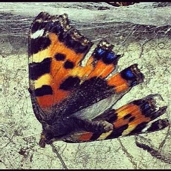This Was In My Garage #butterfly by Orla O'Neill