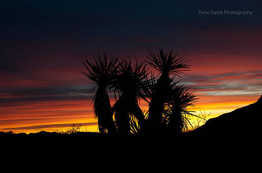 Thorny-haired Family Watching The Sunrise by Tone Garot