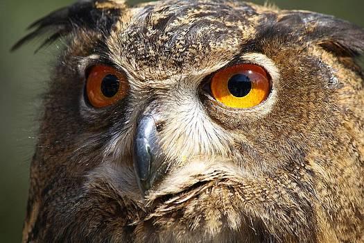 Paulette Thomas - Those Eyes
