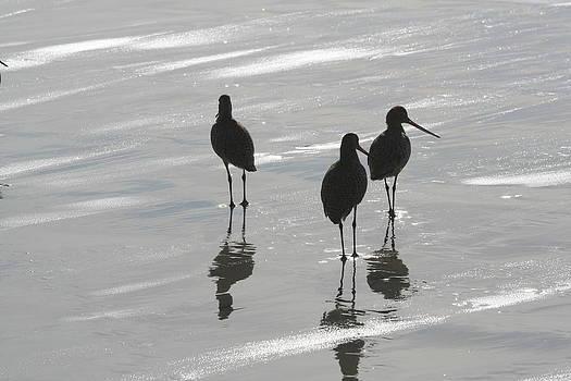 Three Birds by Diana Poe