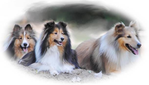 Three Friends by Dottie Dees