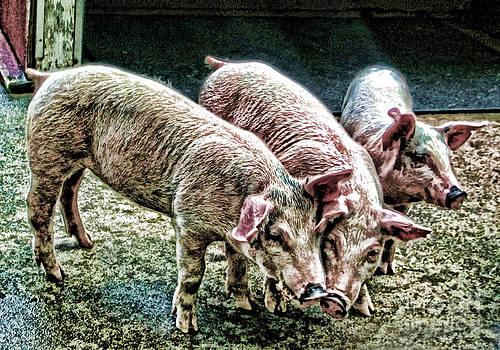 Anne Ferguson - Three Little Pigs