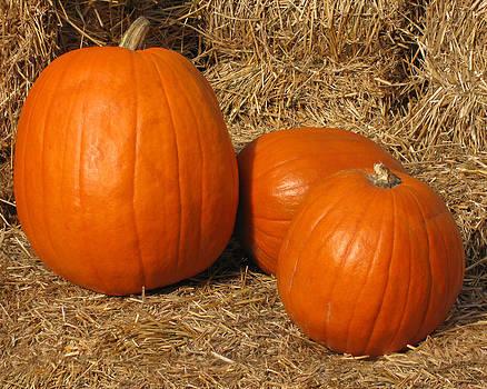 Three Pumpkins On Hay by Charles Dancik