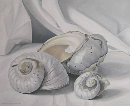 Three Shells by Pera  Schillings