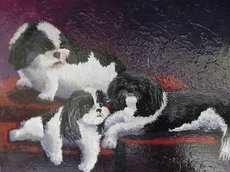 Three Shi Tsu Dogs by Rita Goldner