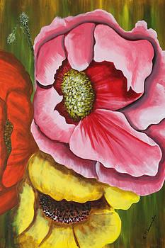 Three strange poppys by Robert Thomaston