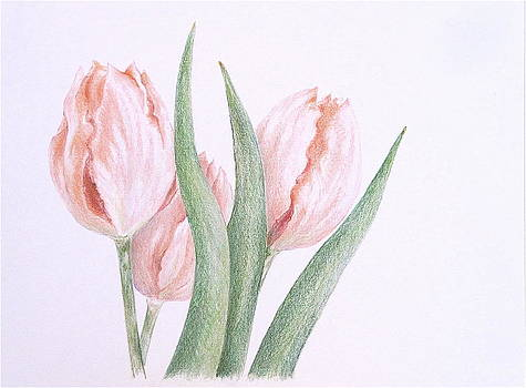 Three Tulips by Renee Goularte