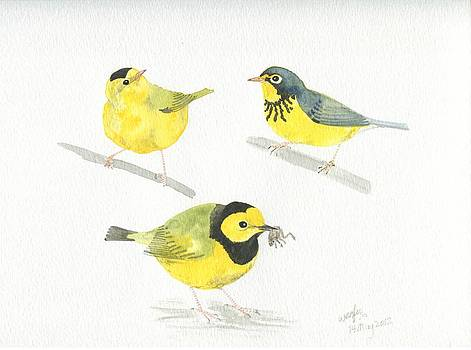 Three warblers by Wenfei Tong