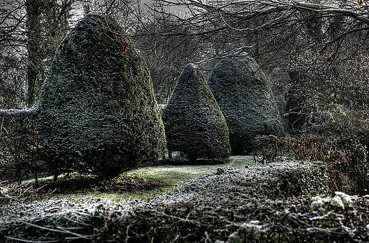 Three Yews by Tim Kahane