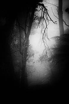 Through the Forest Dimly by Geoff Smith