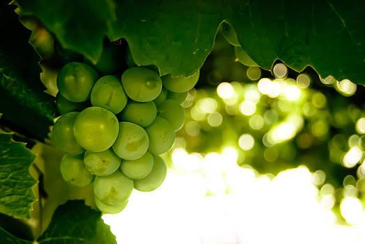 Through the Grapevine by Josh Blaha