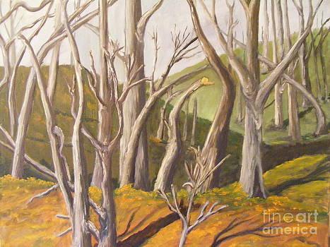 Through the Woods by Mathew Caplan