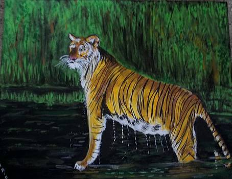 Tiger at Nagerhole Sanctuary by Iris Devadason