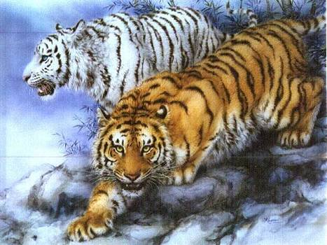 Tiger drawing by Noe Alba