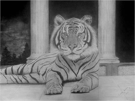 Tiger leisure by Casper Venter