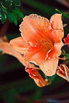 Michelle Cruz - Tiger Lily in the Garden