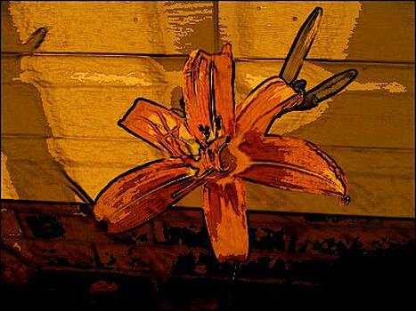 Tiger Lily by Tanya Moody