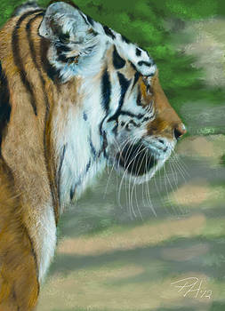 Tiger by Peggy Hickey
