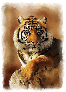 Tiger Portrait  by Michael Greenaway