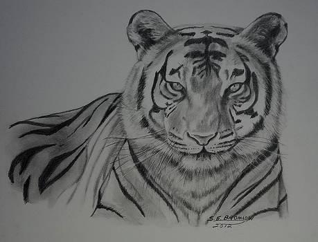 Tiger by Susan Bromlow