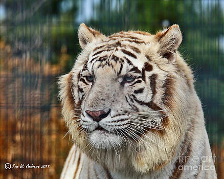 Tiger Thoughts by Tom Andrews