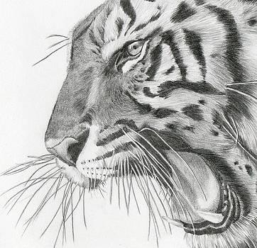 Tiger Tiger  by Sue  Miles