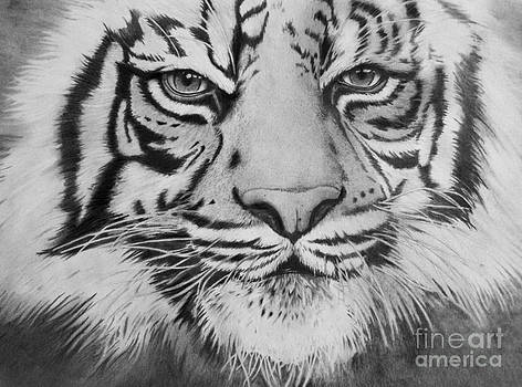 Christian Conner - Tiger