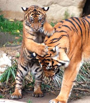 Tigers family by Meeli Sonn
