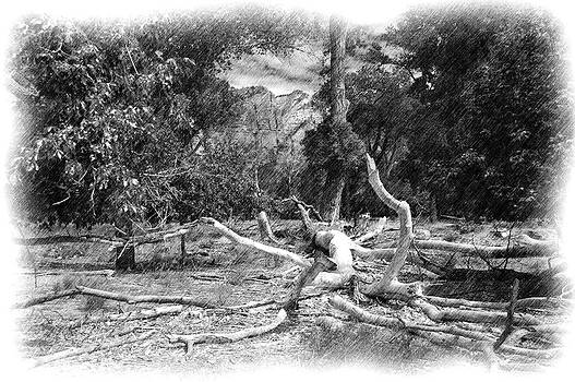 Timber fallen in Zion by Richard Peyton